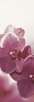 Abrila Kwiat B