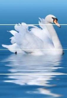 Aquarelle Decor Swan