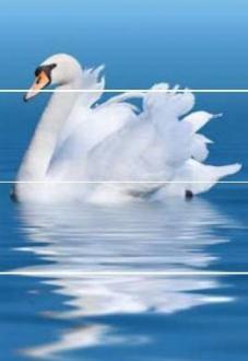 Aquarelle Decor Swan Rev.