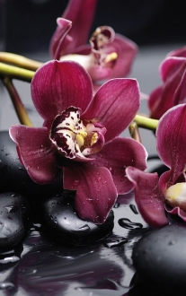 City Orchid