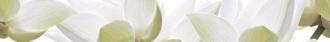 City White Lilies Listwa