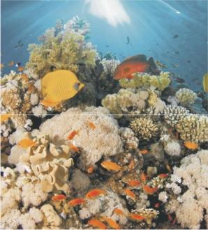 Corals Dec Panno