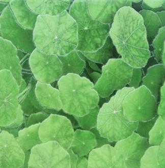 Estanque Viejo Verde