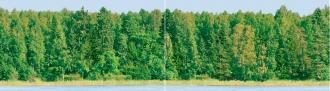 Forest Dec Panno