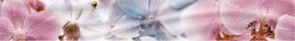 Fortuna Princess Орхидеи 1504-0140