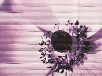 O-Maxima Violet 2