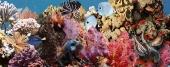 Ocean Reef 1