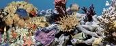 Ocean Reef 2