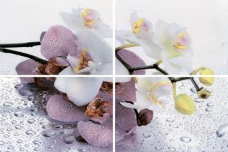 Панно Alba Orchid