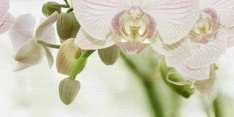 Paris Aqua Orchid C Decor D-MSW12 B3-3