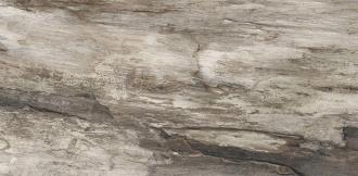 Petrified Tree Grey Bark Rett