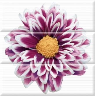 Aure Composicion Flowers