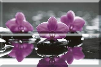 Aure Composicion Wellness Purple 01