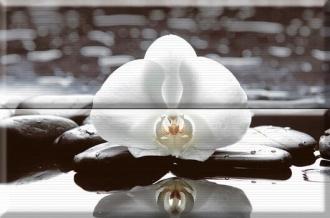 Aure Composicion Welness White 01