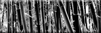 Aure Decor Bambu