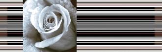 Aure Decor Rose 01