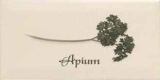 Biselado Decor Apium Crema