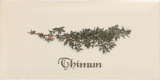 Biselado Decor Thinum Crema