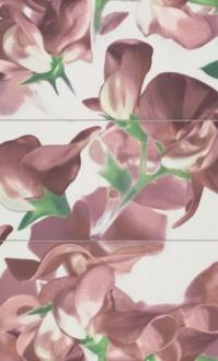 Colour Bloom Carmine