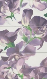 Colour Bloom Violet