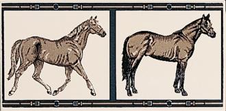 Horses su Panna