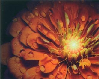 Look Fiore Arancio