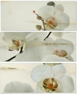 Onice Persa Decor Set Orquidea