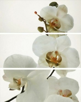 Pure Decor Set Orquidea Blanco Brillo